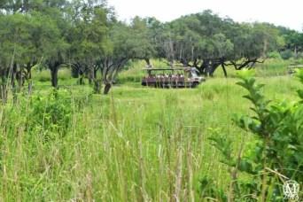 kilimanjaro-safaris-3