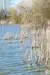 the-chase-nature-reserve-dagenham-essex10