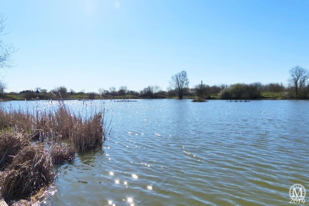 the-chase-nature-reserve-dagenham-essex18