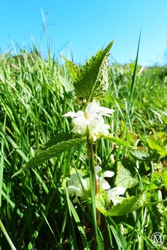 the-chase-nature-reserve-dagenham-essex20