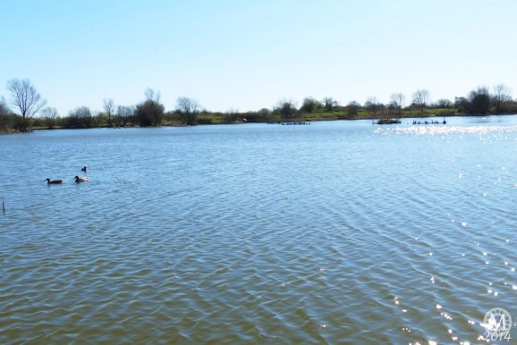 the-chase-nature-reserve-dagenham-essex28