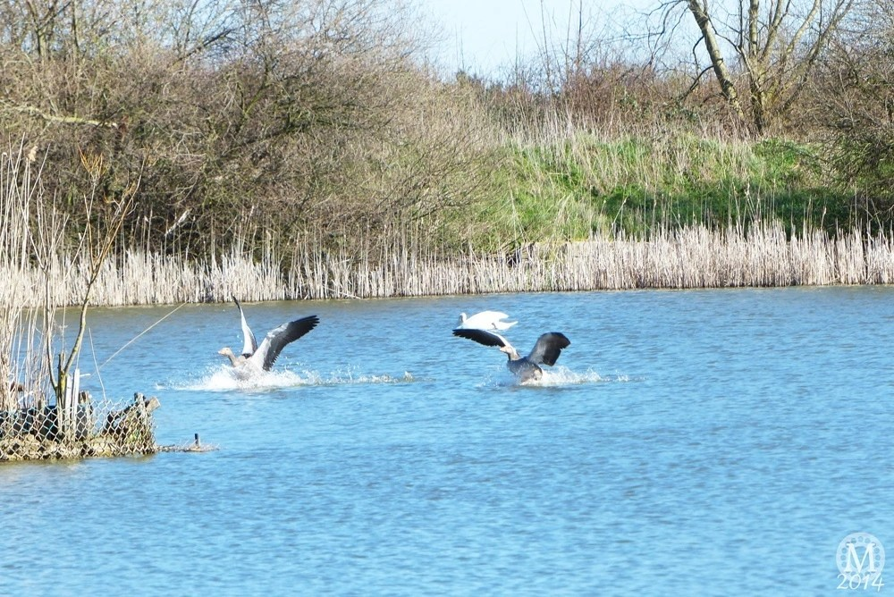 the-chase-nature-reserve-dagenham-essex42