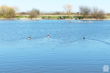 the-chase-nature-reserve-dagenham-essex48