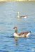 the-chase-nature-reserve-dagenham-essex56