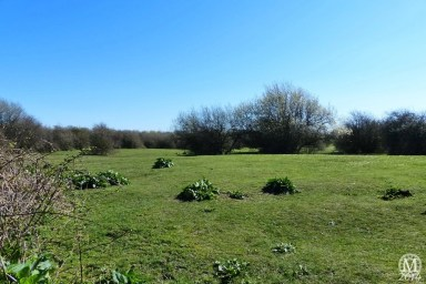 the-chase-nature-reserve-dagenham-essex83