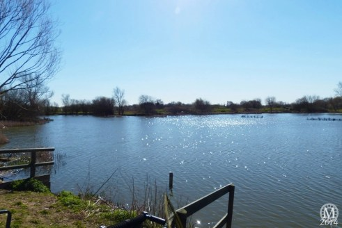 the-chase-nature-reserve-dagenham-essex9