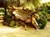 tree-of-life-sign