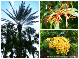 Plants and Flowers around Old Key West Resort