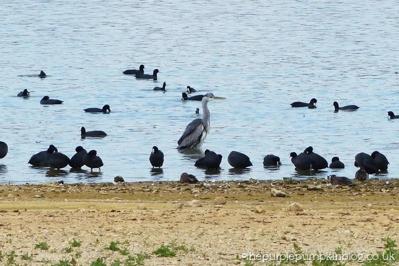 Hanningfield Reservoir Essex