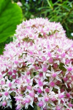 Hanningfield Reservoir - Flowers