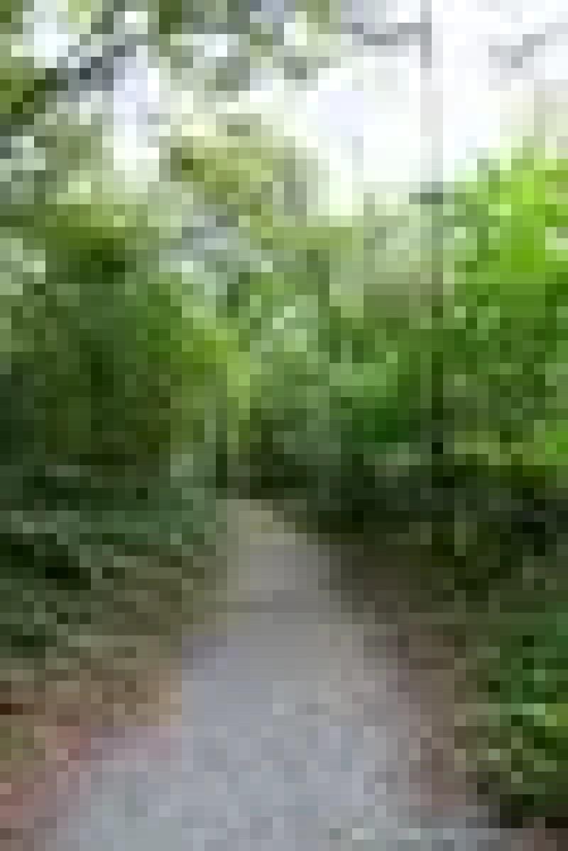 Hanningfield Reservoir Nature Trails (2)