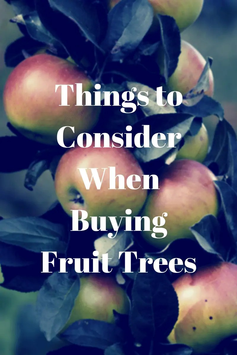 Things To Consider When Buying Fruit Trees