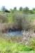 Rainham Marshes RSPB Nature Reserve (23)