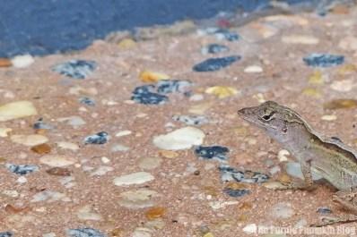 Lizard at Magic Kingdom