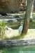 Crane - Kilimanjaro Safaris at Animal Kingdom
