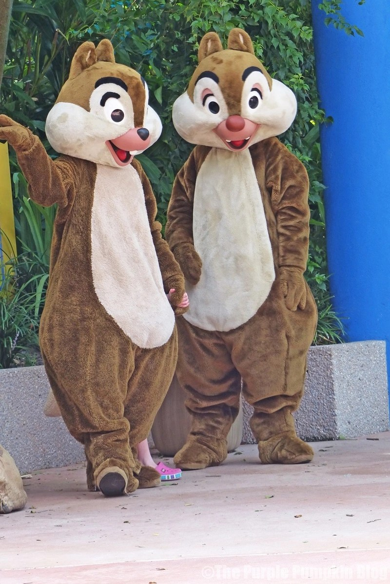 Meeting Chip n Dale at Animal Kingdom