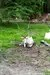 Addax at Animal Kingdom