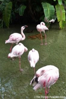 Flamingo at Disney Animal Kingdom