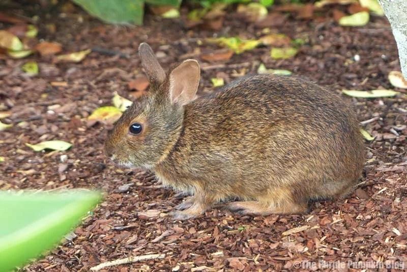 Rabbit at Disney Magic Kingdom
