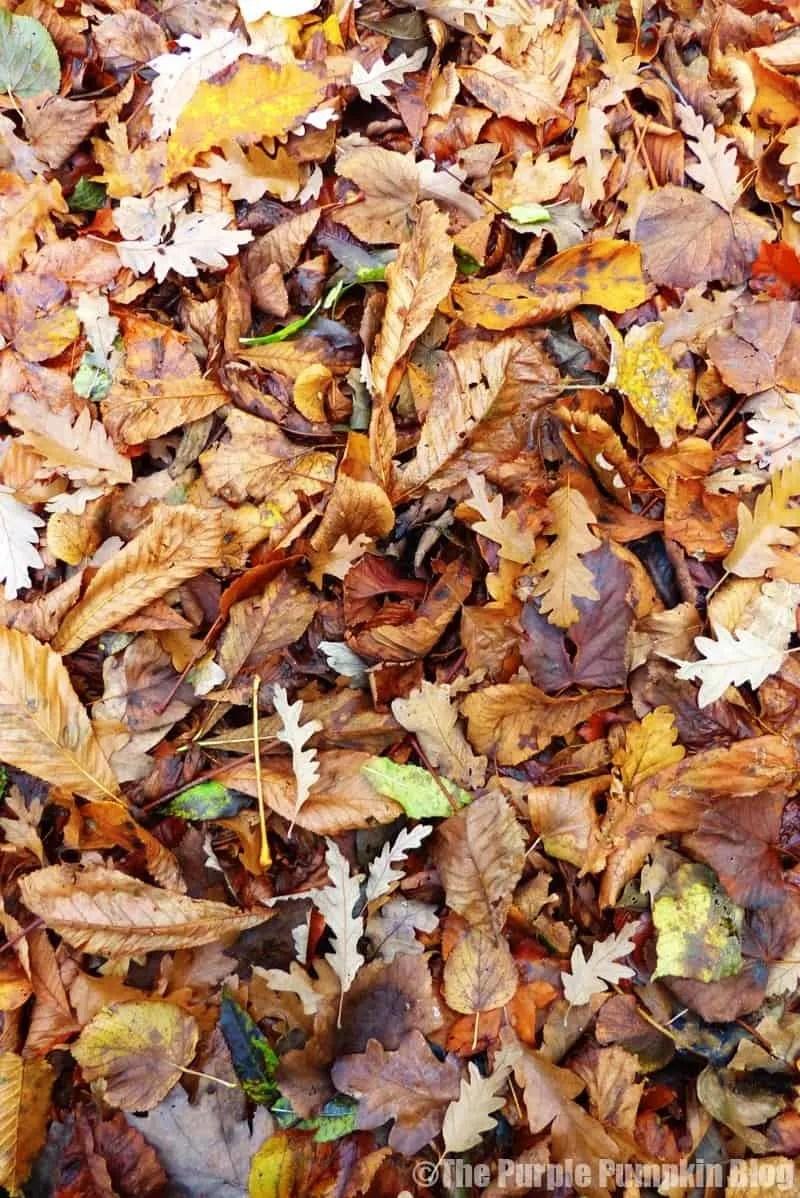 Reason To Love Autumn - Fallen Leaves
