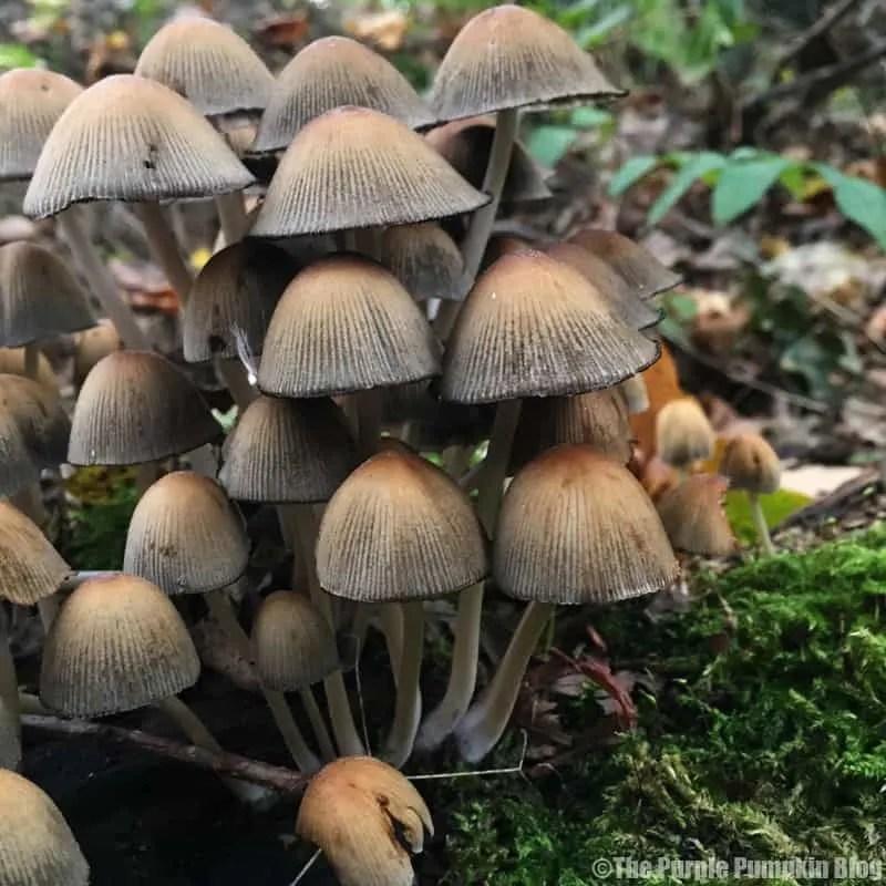 Autumn - mushrooms