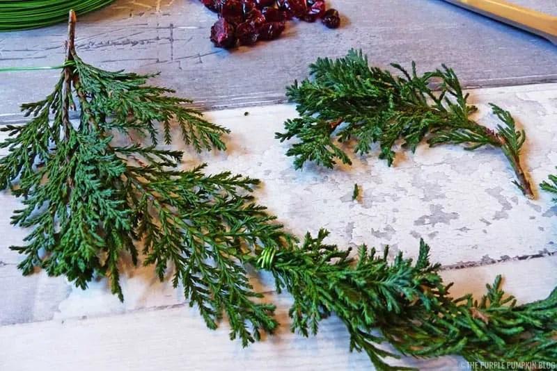 Fern & Dried Cranberry Wreath - Step 2