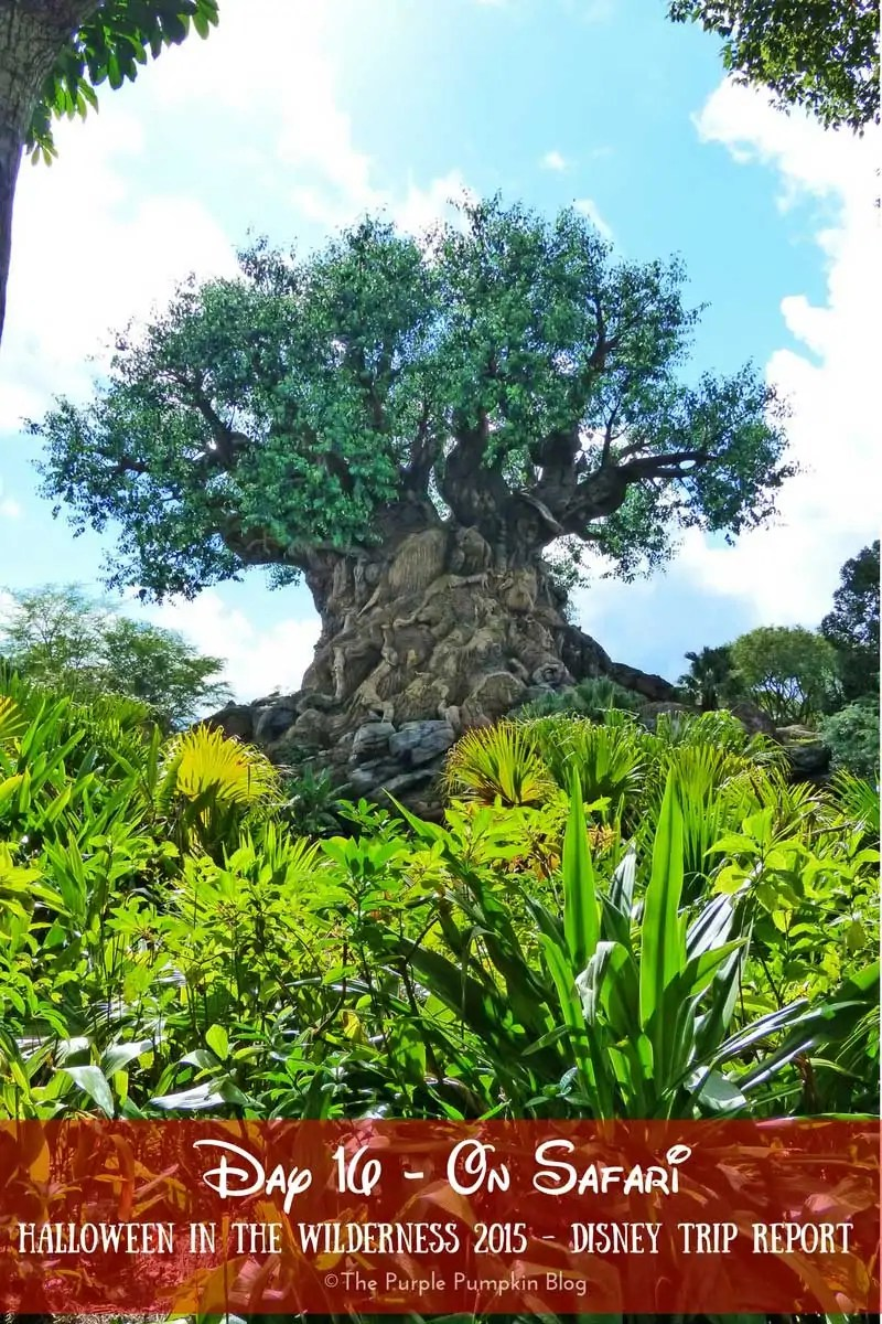 Day 16 - On Safari - Halloween in the Wilderness 2015 Disney Trip Report