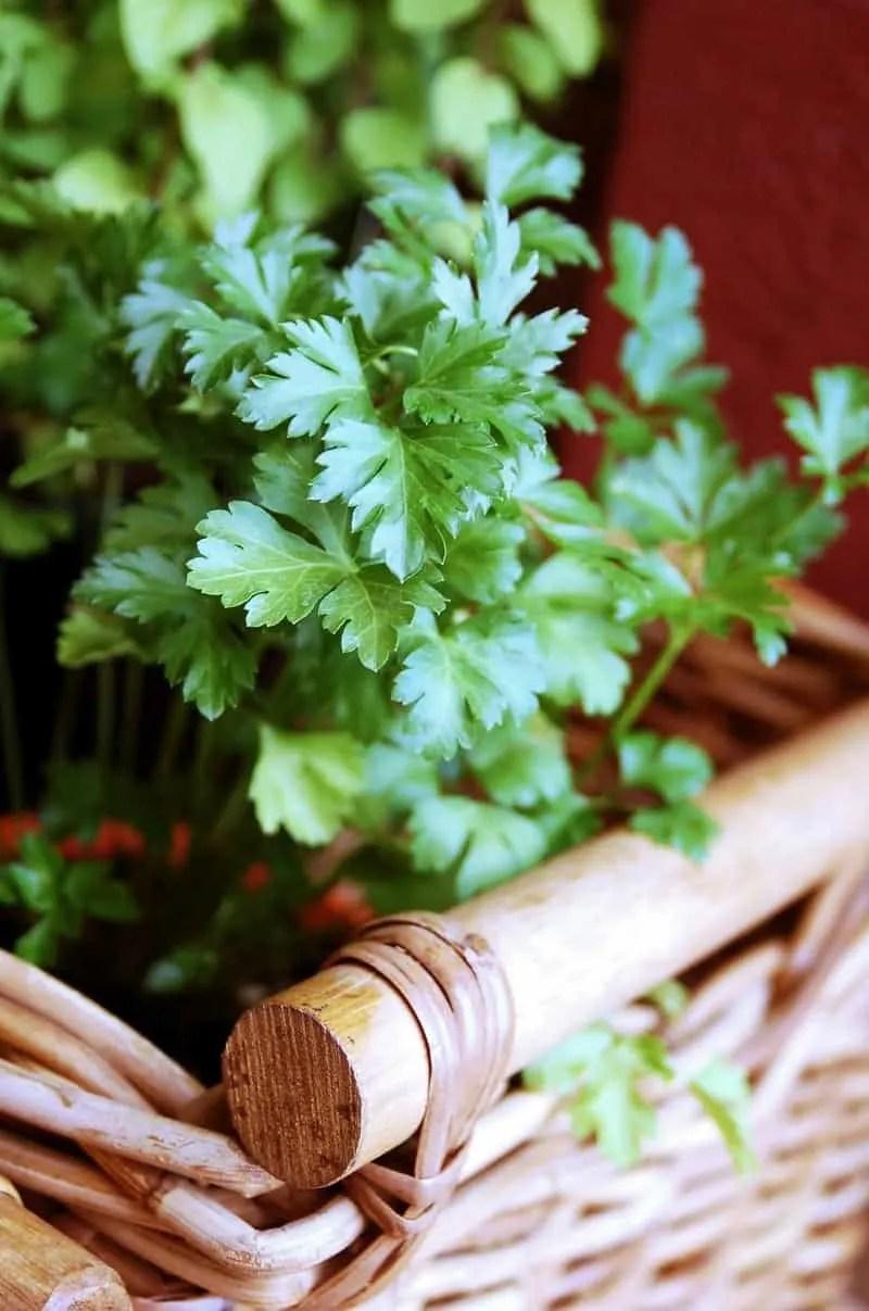 Fresh Herbs - Parsley