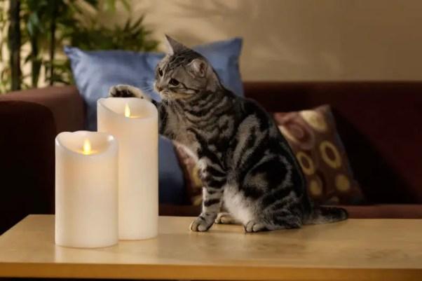candlecat2