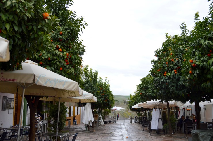 Orange tree in Córdoba, Spain -- The Quirky Pineapple