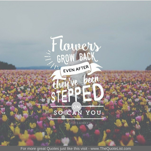 """Flowers grow back, even after they are stepped on. So can you"""