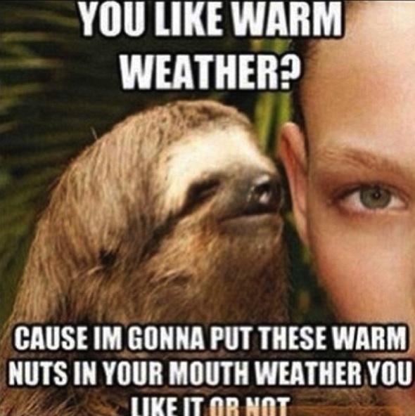 Sloth Memes Can U Not