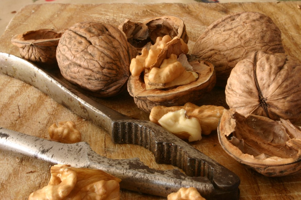 Food Poetry, Walnut, Kim Roberts, The Rambling Epicure. Photo courtesy of Dreamstime.