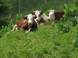 Mindful Eating: Farmers, the Land, and Local Economy, by Jonell Galloway, Editor of The Rambling Epicure, Switzerland. Mindful Eating / Slow Food, real food.
