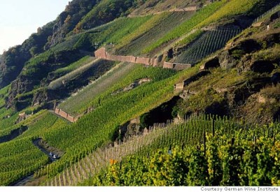 Steep Mosel vineyards in Germany, photo by http://lastingimpressionswineblog.wordpress.com/2011/02/23/german-wine-wineblog-20/