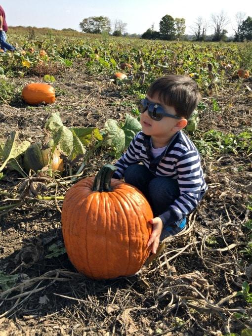 pumpkin-patch-7