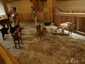 How to Visit the Ark Encounter with Children