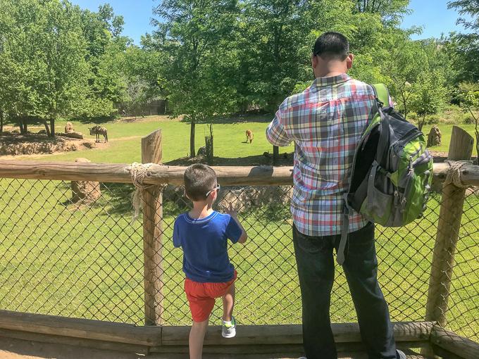 7 Ways to Make Family Memories at the Cincinnati Zoo