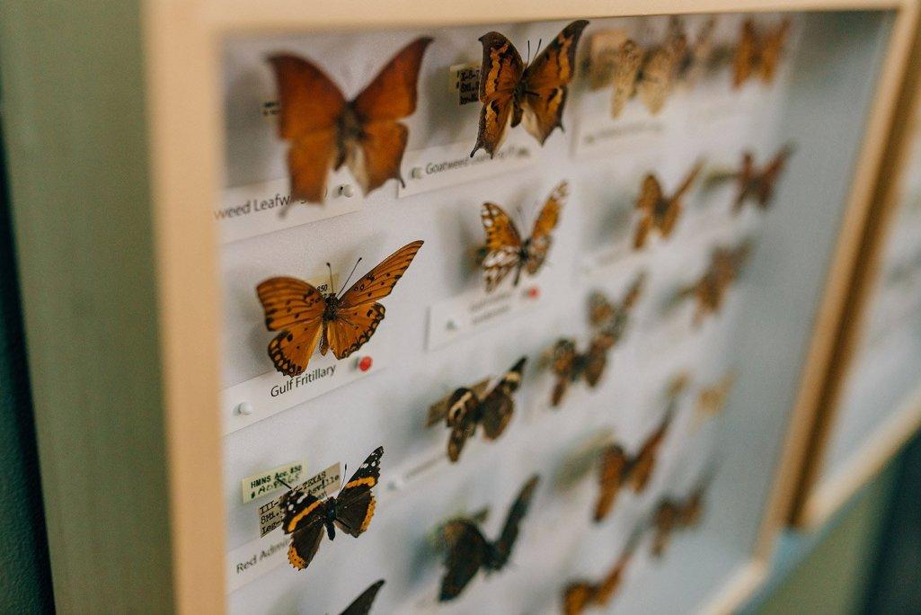 butterflies at Houston Arboretum