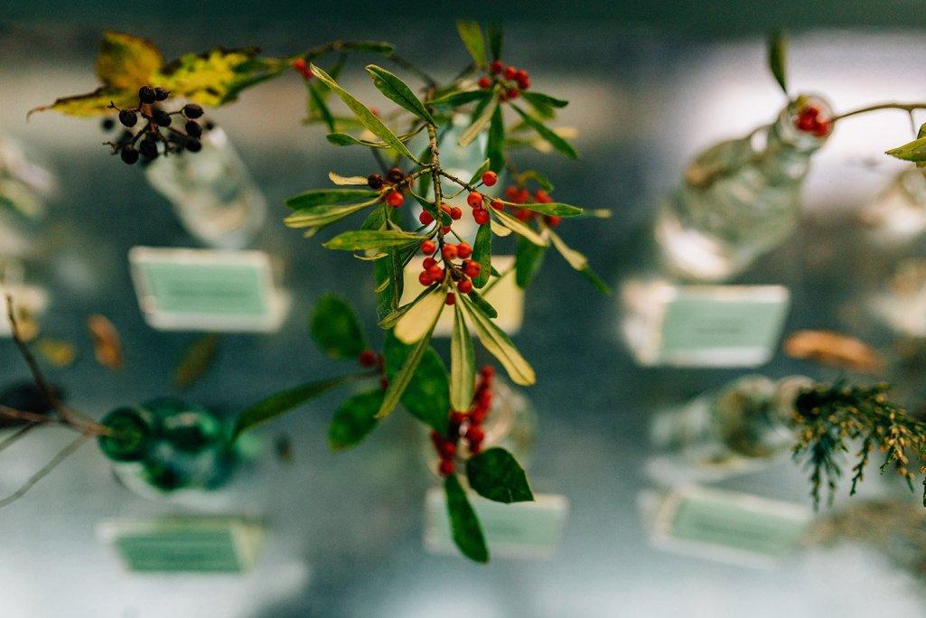 details at Houston Arboretum