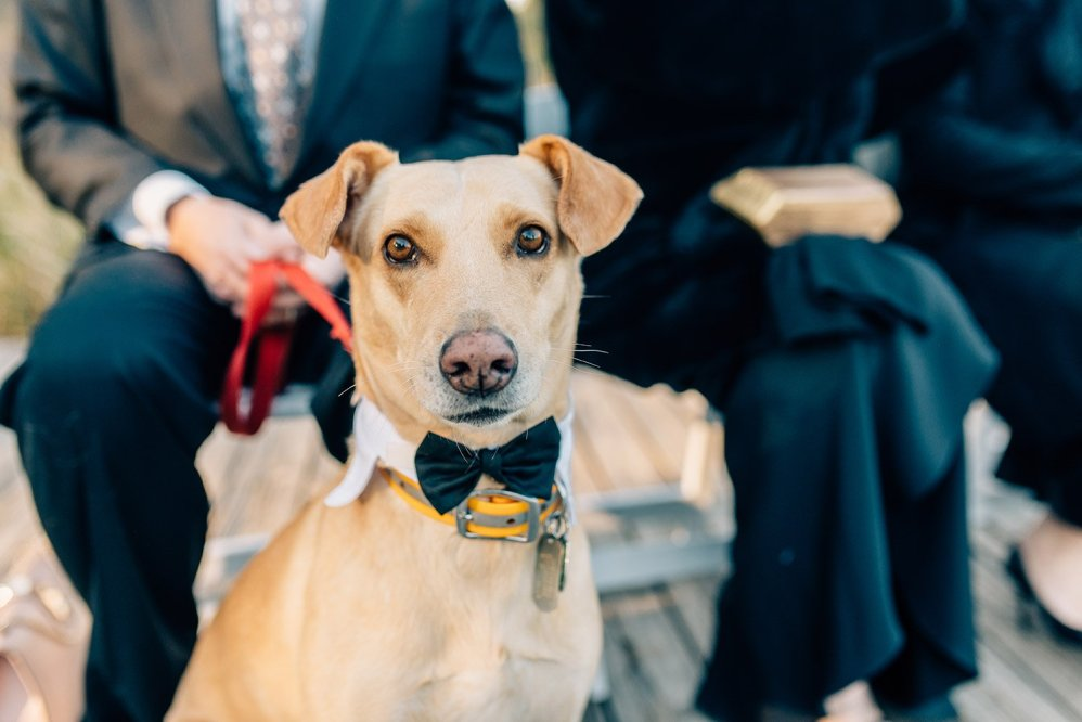 dog in a wedding
