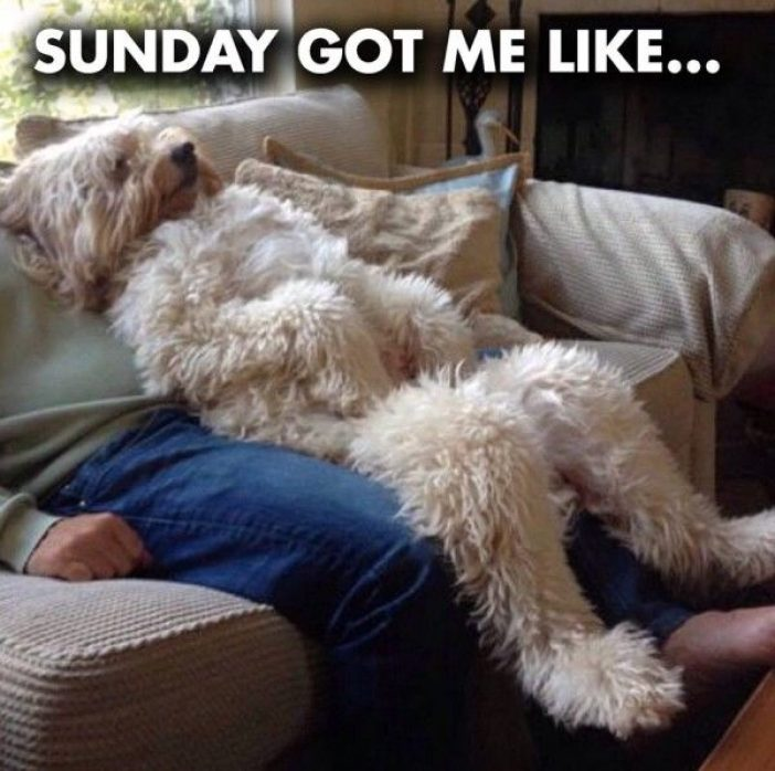 80 Best Sunday Memes, Pics and Images for Funny Fundays!!