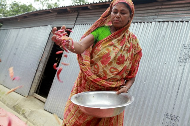 Chilli Farming in Bangladesh