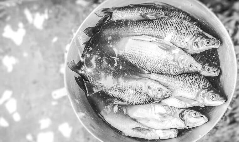 nutritional benefits of freshwater fishes