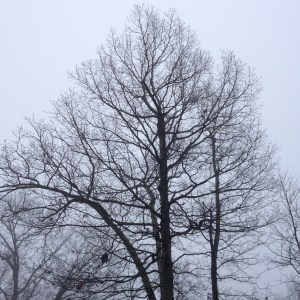 Winter, tree, bare, fruitless, cold, alive