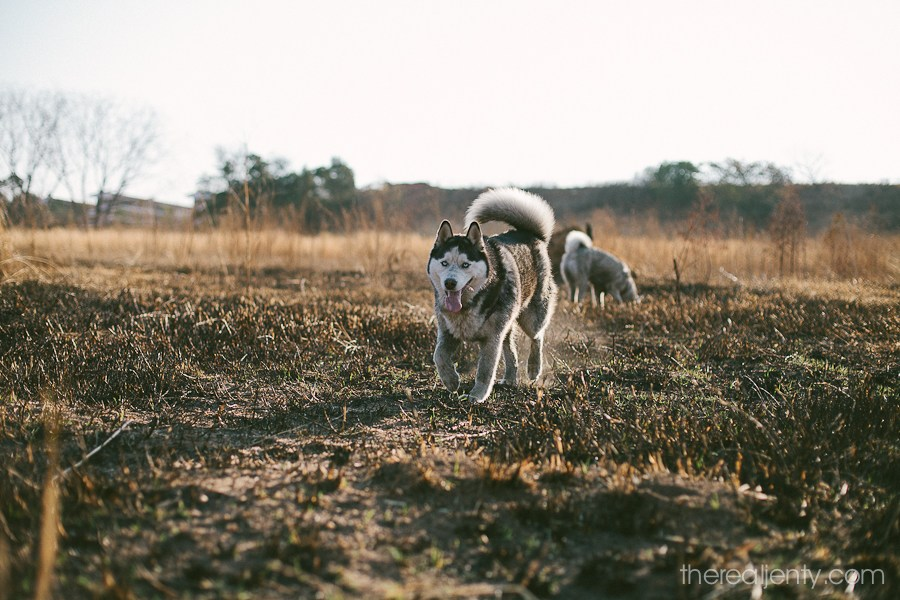 A-walk-with-huskies-013