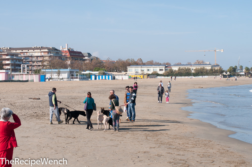 Pescara beach and dogs
