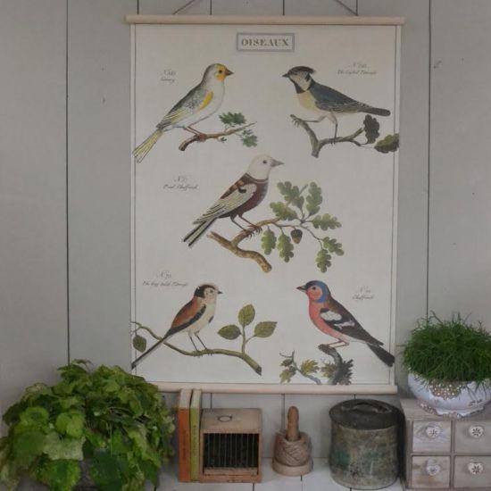oiseaux bird chart