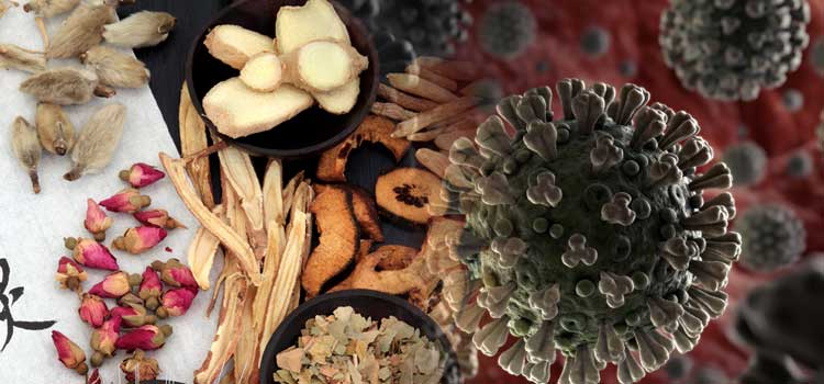Can Chinese herbs protect me from COVID-19?