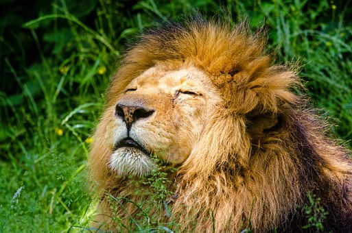 Lions kill and EAT poacher with just his HEAD found